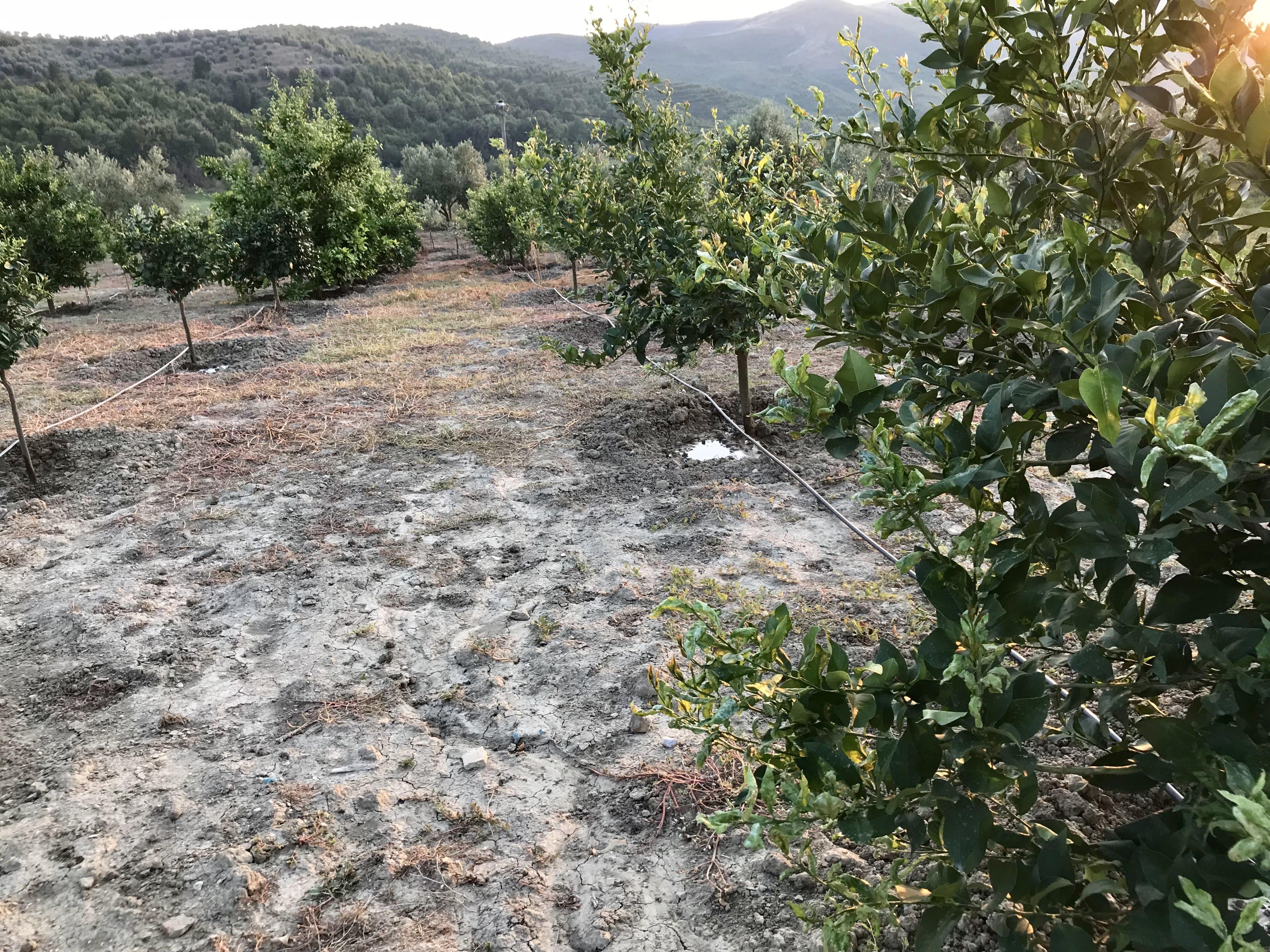 Okazion shtepi dhe toke ( pemtari 1000 drure ullinje)